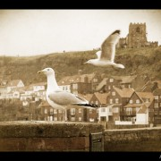 whitby-09