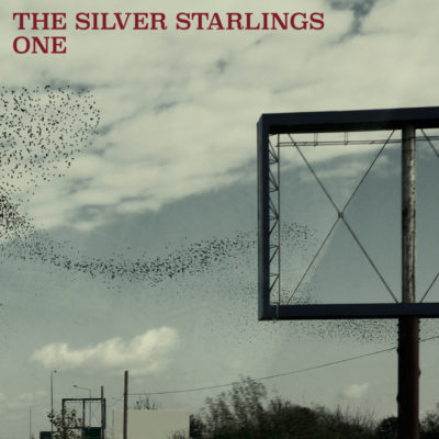 silver-starlings-one