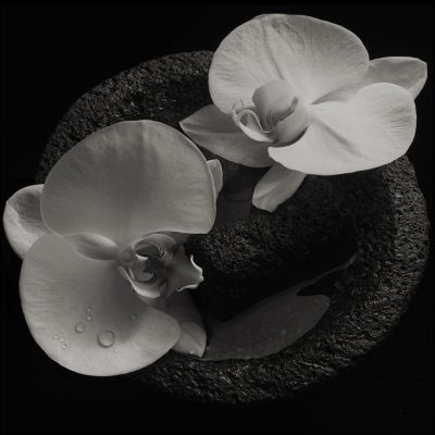 Mike Patton & Jean-Claude Vannier - Corpse Flower
